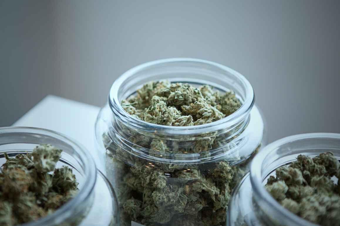 Dried marijuana in jars